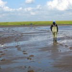 We got to go on a long walk in the Wadden Sea national park (Vadehavet).